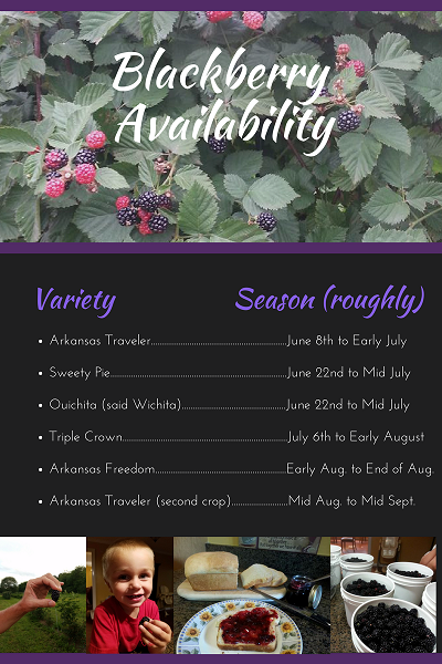 Blackberry Season 2017 Availabiity