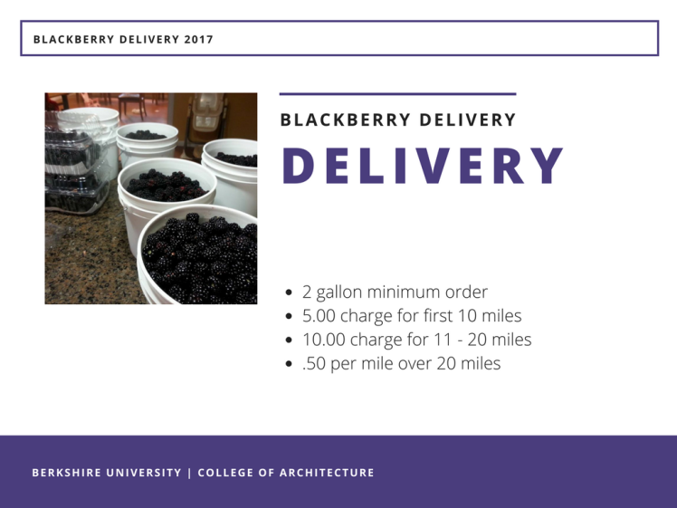 Blackberry Season 2017 - Delivery Service